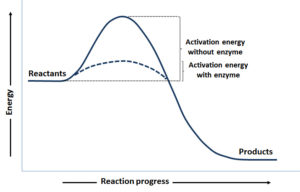 Gráfica_mecanismo reacción enzimáica